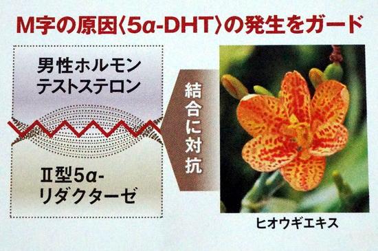 5α-DHT 発生ガード