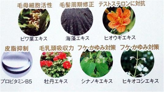 7種の毛活性因子